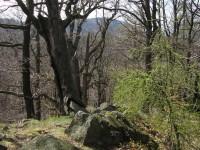 Pohled z Hradce na Studený vrch